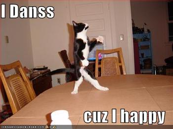 1554111701_dancing_cat_answer_1_xlarge.jpeg