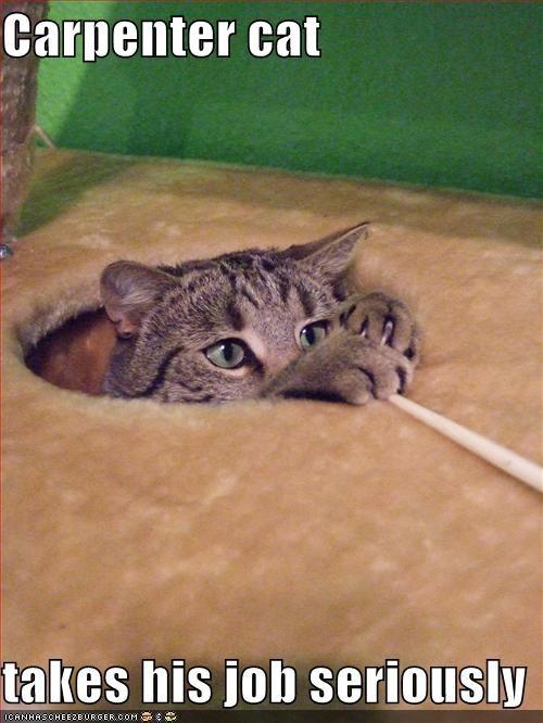 carpenter-cat.jpg.jpeg