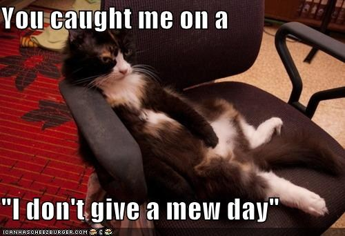 meow.jpeg