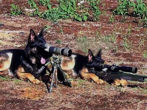 sniperdogs.jpg