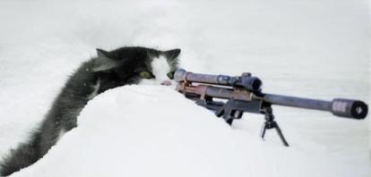 cat_sniper.jpg