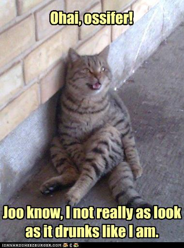 Catpicturesfunny894.jpg