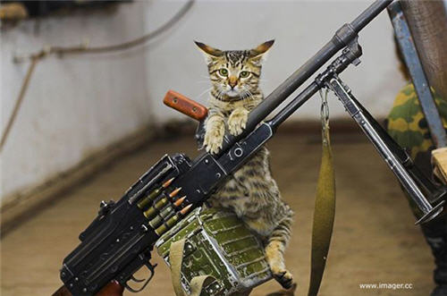 funny-cats-with-machine-guns.jpg