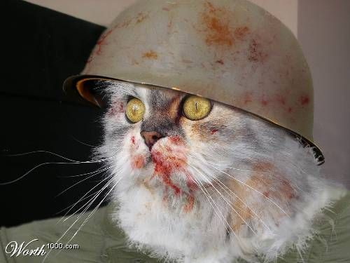 funny_cat_pictures_206.jpg